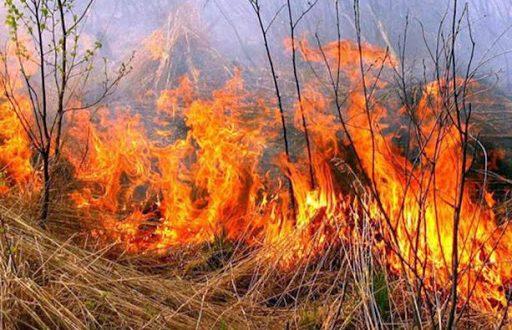 Вступив в дію Закон «Про внесення змін до деяких законодавчих актів України з метою збереження довкілля»